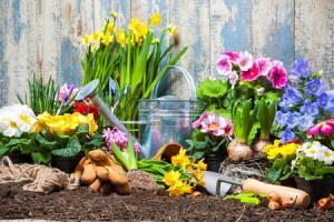 36879688-tuingereedschap-en-bloemen-in-de-tuin kopie